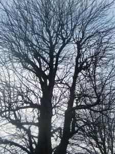 drzewo w Kulturze